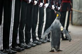 Penguin Sir Nils Olav Promoted to Brigadier