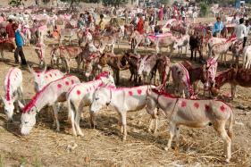 Pakistan Plans to Sell Donkeys to China to Attract Investors