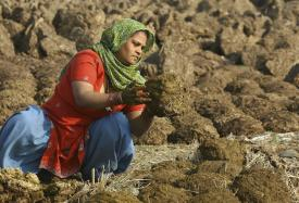 Gujarat Municipality Asks Cattle to Drop Not More Than 3kg of Dung Per Day