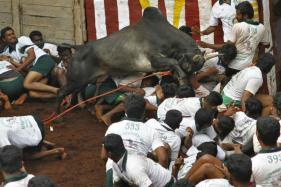 Facing Protests, Madurai Collector Withdraws Aadhaar Diktat on Jallikattu