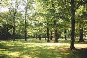 Using Your Local Park Indicates Healthy Attitudes