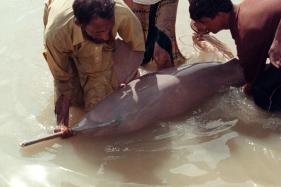Student Community In Bengal To Help Conserve Gangetic River Dolphin