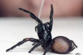 Man Burns Down Flat in California in Bid to Kill Giant Spider