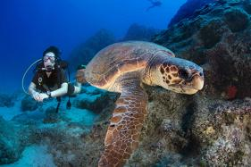 See Spectacular Underwater Species at These Diving Destinations