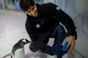 Sidharth Malhotra Celebrates World Penguin Day in New Zealand