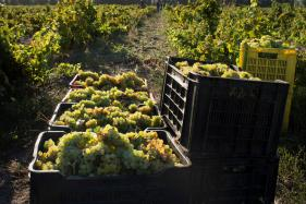 S Africa Winemakers on Quest For Quality And Prestige