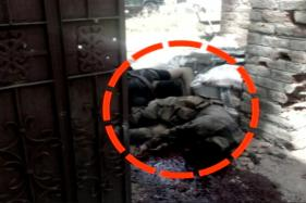 Sabzar Bhat, Burhan Wani's Successor in Hizbul Mujahideen, Killed in Tral Encounter
