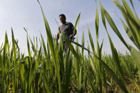 Endosulfan-Affected in Karnataka to go on Hunger Strike For Better Compensation