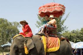 Expedia to Remove Bookable Animal Tours And Activities on Its Site