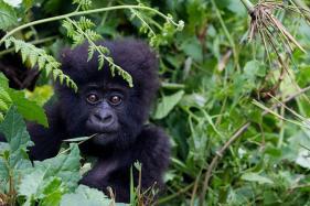 Rwanda Targets High-end Tourist Market