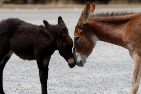 Orphaned by War, Wild Donkeys Make a Comeback in Cyprus