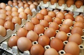 Dutch Arrest Two Suspects as Europe Egg Scandal Spreads East