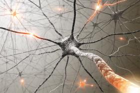 Hormone Shows Promise For Treating Neurodegenerative Conditions