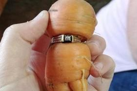New Carrot Found to be Taken, Discovered Wearing Diamond Wedding Ring
