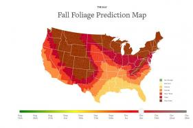 New Interactive Map Tells You When The Leaves Are at Their Most Colorful in US This Fall