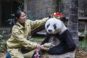 Bye Bye Basi: World's Oldest Captive Panda Dies in China