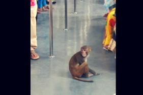 WATCH: Monkey Takes a Joy Ride in Delhi Metro, Video Goes Viral