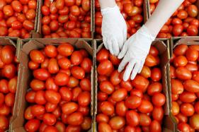 Know Why it is Important to Include Tomatoes in Your Diet