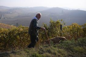 White Italian Truffles Fetch 75,000 Euros at Auction for Charity