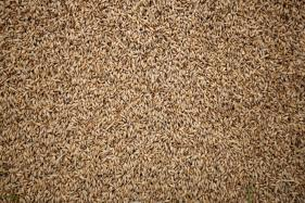 Eating Whole Grains May Help You Lose Weight, Reduce Risk of Heart Disease, Diabetes