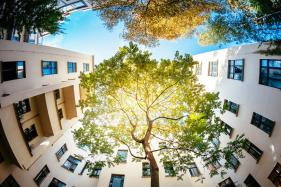 Trees in Urban Areas Can Reduce The Risk of Asthma Attacks
