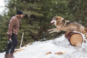 Watch: Salman Khan Battles Wolves In Tiger Zinda Hai