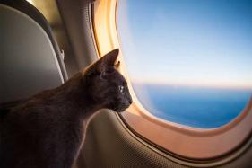 Rise in Onboard Animal-Related Incidents Prompt Delta to Tighten Regulations