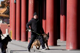 In Beijing's Forbidden City, no Holiday for Canine Patrol