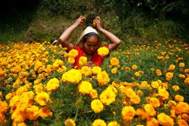 Diwali 2017: Significance of Marigold Flowers, Mango Leaves