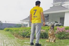 MS Dhoni Dons CSK Jersey to Celebrate Return of the Super Kings