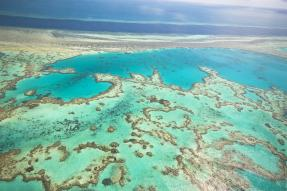 Australia Offering Reward To Help Solve Great Barrier Reef Crisis