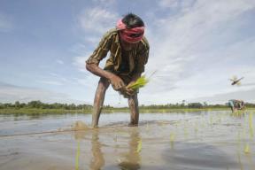 In Karnataka, Netas Rush to Score Points Over Farm Loan Waiver