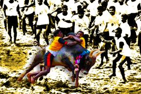 Jallikattu is Not Just Bull, It's Also About Animal Spirits