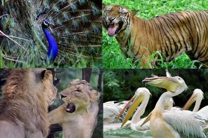 Delhi Zoo: National Zoological Park in Delhi