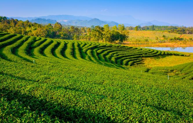 10 Destinations That Can Help You Explore Assam Ibnlive