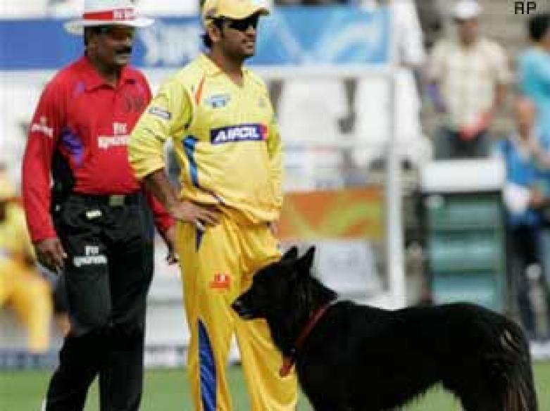 Straying black dog steals show at the IPL opener