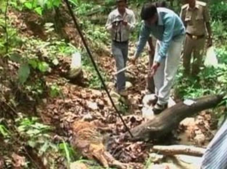 Tiger found dead in Jim Corbett park