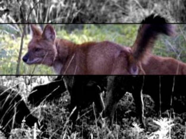 Tadoba-Andhari Tiger Reserve hit by poaching
