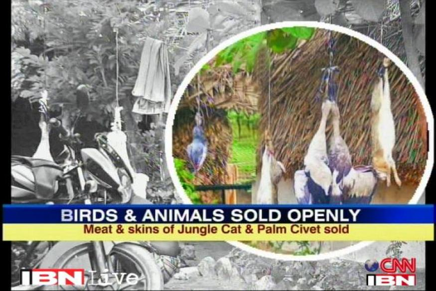 Endangered animals, birds sold openly in Puducherry
