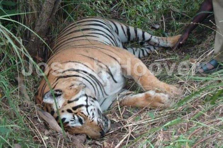 Poachers galore in TN, Karnataka tiger reserves