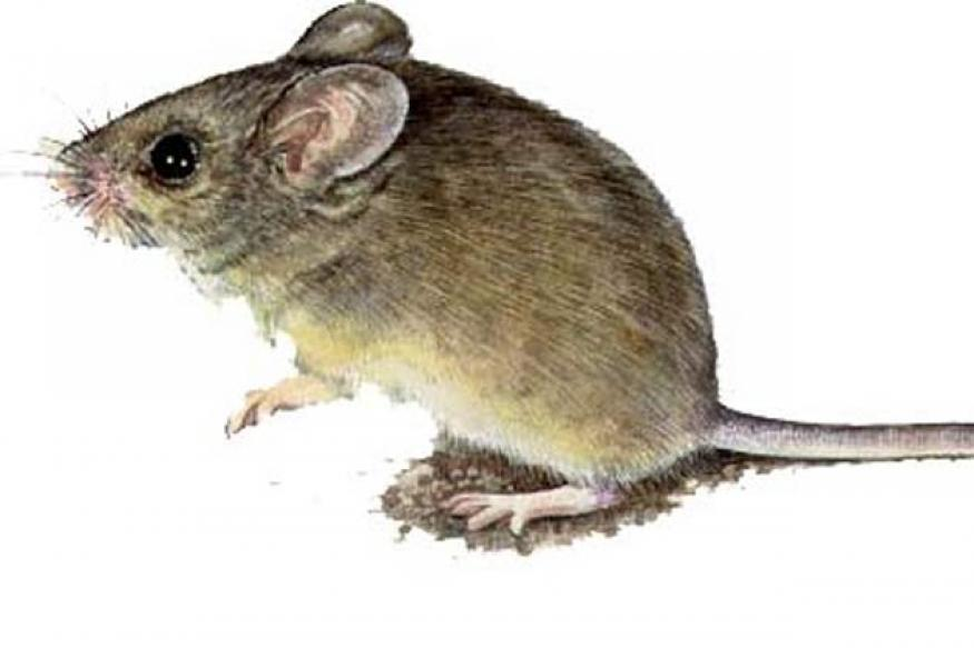 Delhi: Officer's feet bitten by rats in hospital