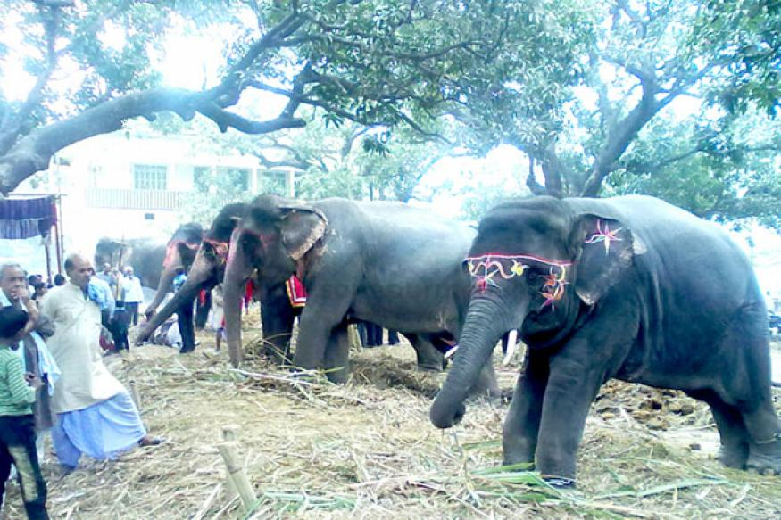 Asia's biggest cattle fair 'Sonepur mela' starts