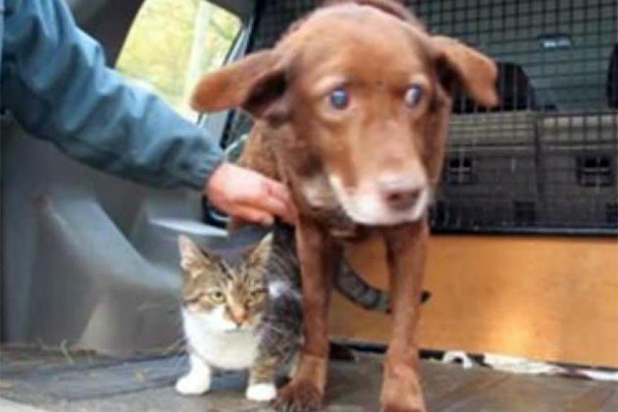 Guide cat takes blind dog for walks