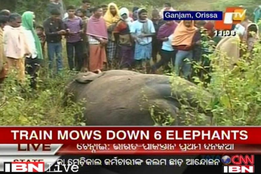 Odisha: Chennai-bound train mows down 6 elephants