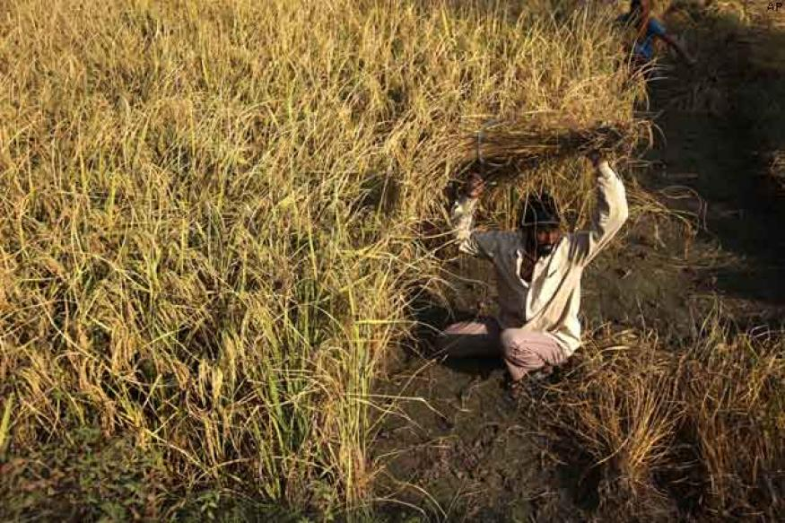 Odisha launches Rs 1 per kg rice scheme for poor