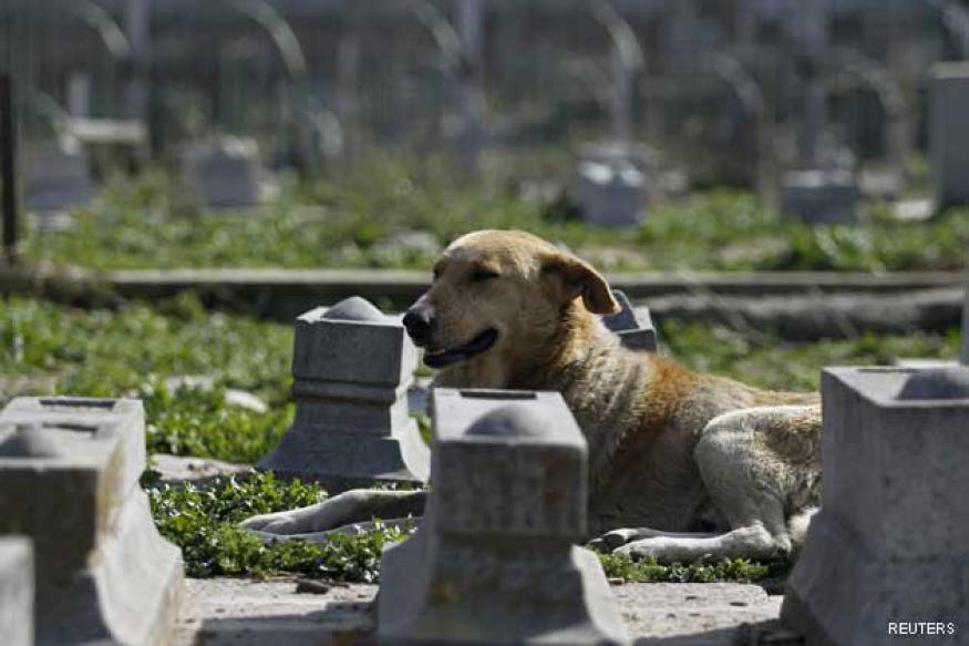 Pakistan: Man buries pet dog near graveyard, arrested