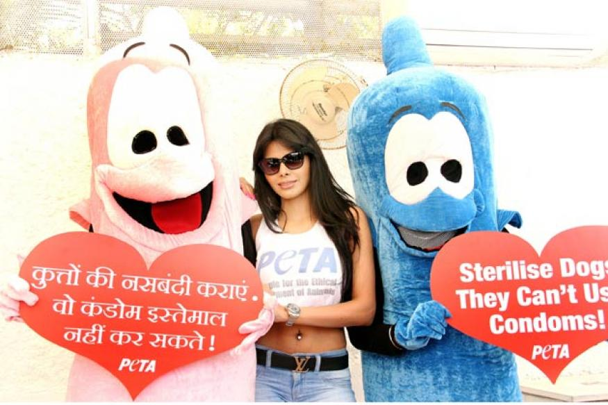 Sherlyn Chopra advocates animal birth control