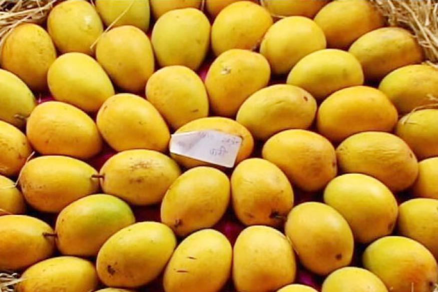 Artificially ripened Alphonso mangoes destroyed by FDA
