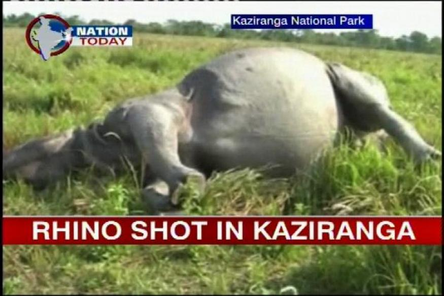 Assam: Poachers kill rhino at Kaziranga National Park