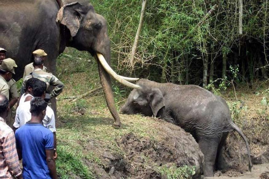 Snapshot: Heartbreaking photo of elephant trying to rescue his female mate from a pond